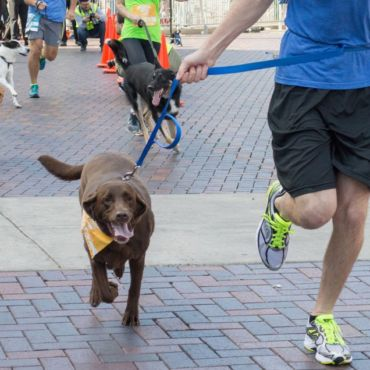 The Best Types Of Dogs For Runners | Men's Health